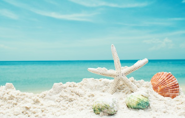 Картинка песок, море, пляж, звезда, ракушки, summer, beach, sea, blue, sand, starfish, seashells