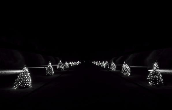 Картинка ночь, праздник, ёлки