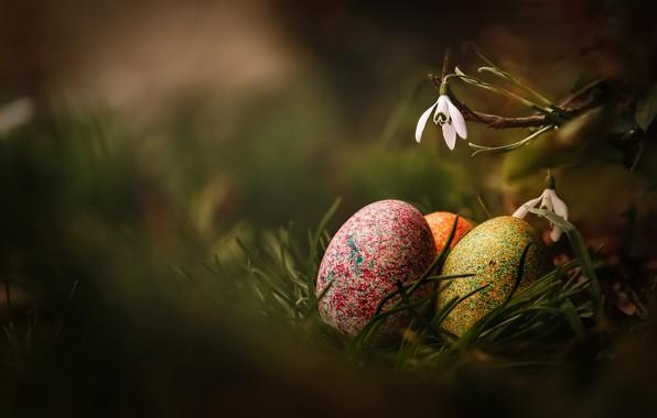 Картинка трава, макро, цветы, природа, праздник, яйца, весна, пасха, первоцветы