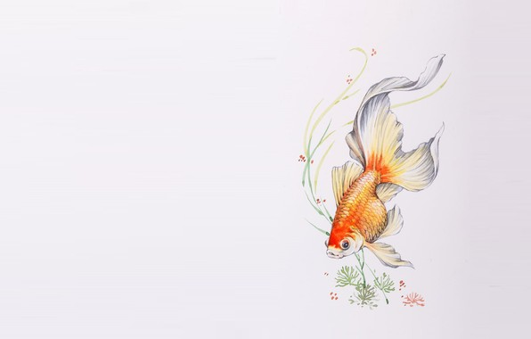 Картинка водоросли, рисунок, рыбка, арт, золотая рыбка
