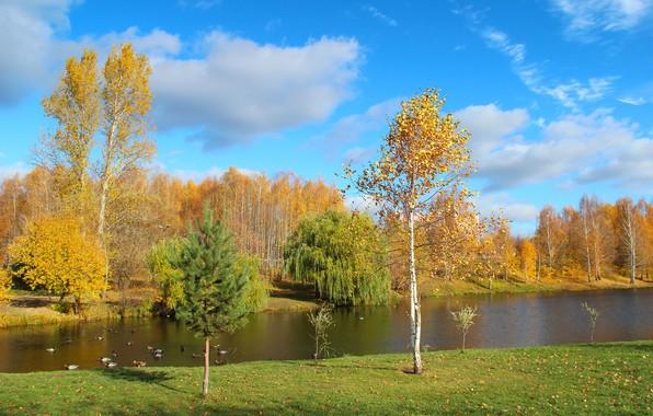 Картинка осень, пейзаж, природа, парк, красота, октябрь, золотая осень