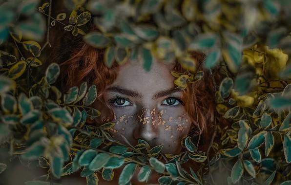 Картинка глаза, взгляд, листья, девушка, лицо, рыжая, рыжеволосая