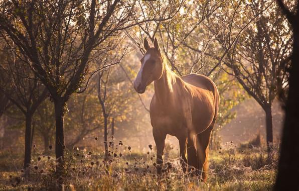 Картинка лес, солнце, свет, блики, конь, лошадь, паутина, размытие, утро, рыжий