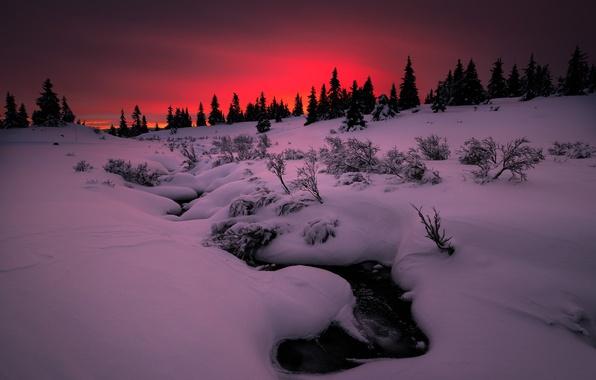 Фото обои зима, снег, закат, природа