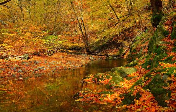 Картинка Поток, Осень, Лес, Ручей, Fall, Листва, Autumn, Colors, Forest, Листопад, Leaves, Flow, Stream