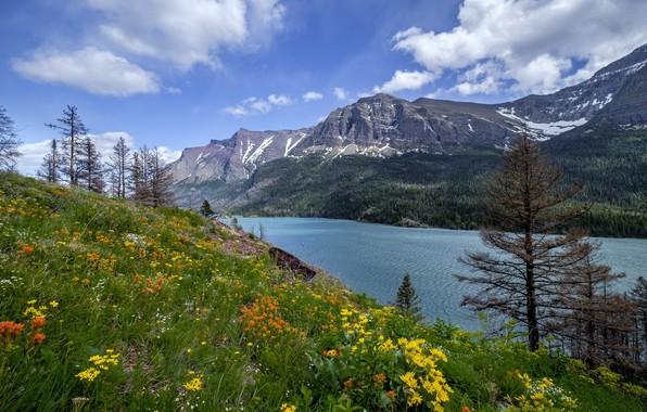 Картинка цветы, озеро, гора, луг