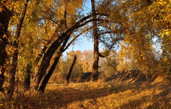Картинка Осень, Деревья, Fall, Листва, Autumn, Colors, Trees, Leaves