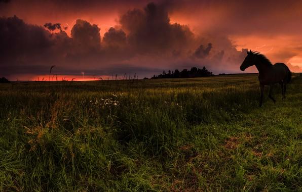 Картинка гроза, поле, небо, трава, тучи, молнии, лошадь, зарево, непогода