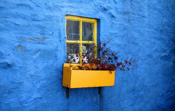 Картинка синий, стена, минимализм, окно, штукатурка, цветник, цыеты