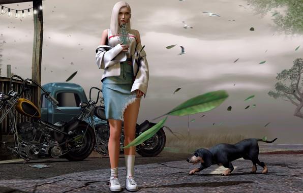 Картинка девушка, улица, собака