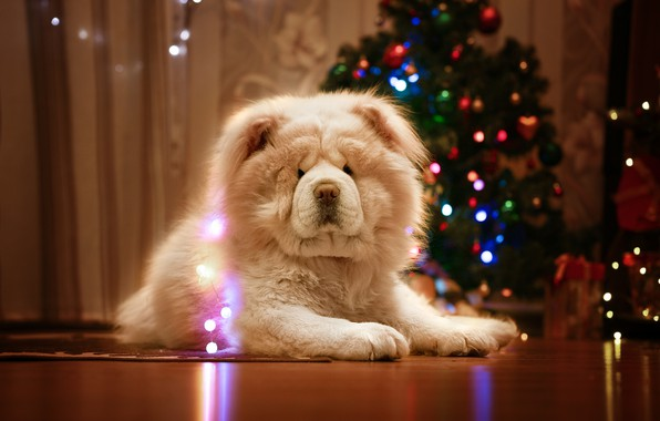 Картинка собака, Новый год, ёлка, гирлянда, Чау-чау