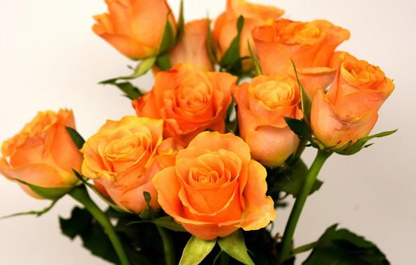 Картинка розы, букет, желтые, roses