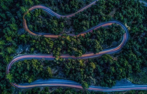 Картинка дорога, лес, свет, вечер, выдержка, вид сверху