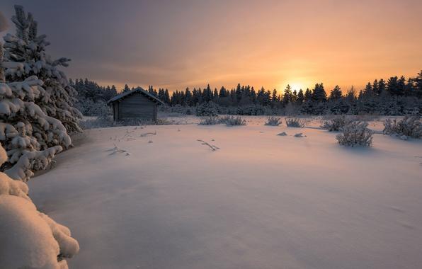 Картинка зима, лес, снег, закат, Финляндия, Finland