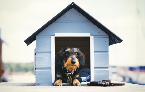 Картинка друг, собака, домик