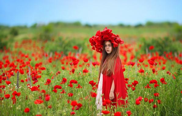 Картинка поле, цветы, природа, маки, девочка