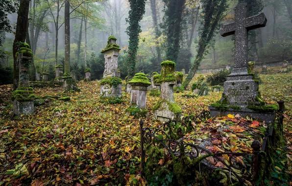 Картинка листья, могилы, кладбище