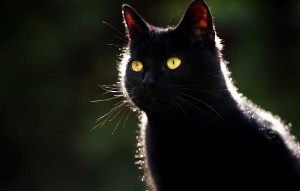 Картинка глаза, кот, усы, фон, черный