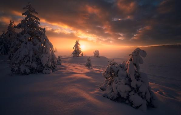 Картинка зима, снег, деревья, закат, ели, Норвегия, сугробы, Norway, Рингерике, Ringerike