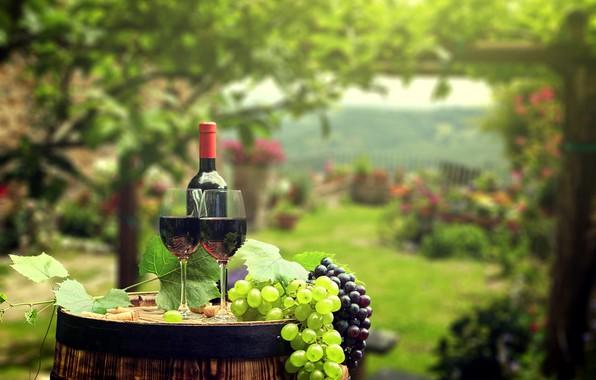Картинка зелень, листья, фон, вино, бутылка, сад, бокалы, виноград, пробки, бочка, боке