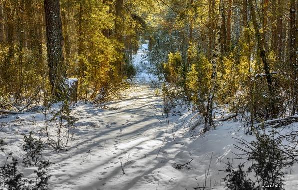 Картинка Зима, Деревья, Снег, Лес, Nature, Winter, Snow, Trees