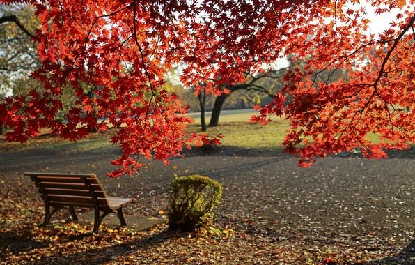 Картинка Осень, Скамейка, Парк, Fall, Листва, Park, Autumn, Colors, Leaves