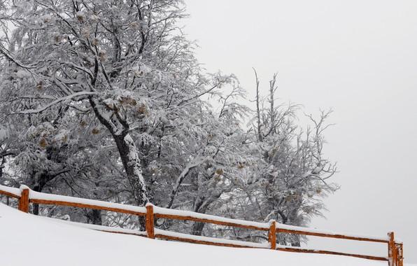 Картинка снег, природа, дерево, забор
