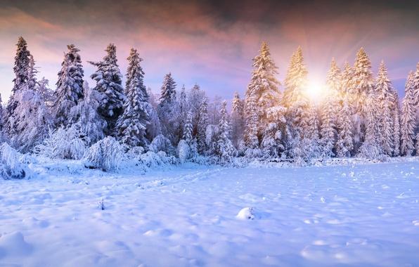 Картинка зима, лес, небо, солнце, облака, лучи, снег, пейзаж, сказка, ели, мороз, сугробы, ёлки, тропинка, ёлочки