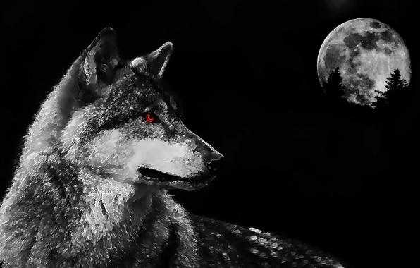 Картинка глаза, луна, волк, хищник