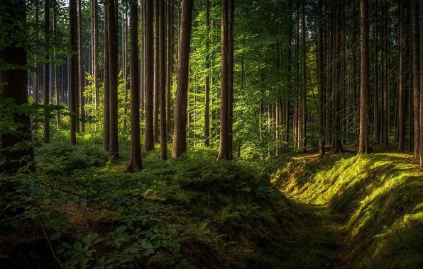 Картинка лес, Germany, Bavaria, солнечный свет, Oberschoenenfeld
