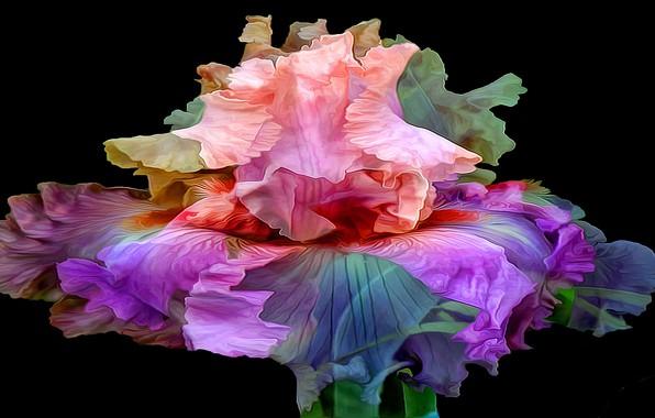 Картинка цветок, линии, фон, краски, лепестки, ирис