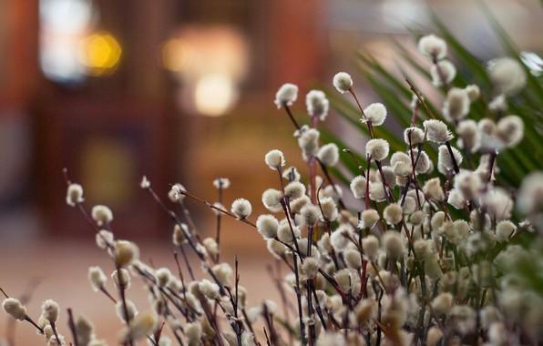 Картинка фон, весна, картинка, верба, веточки вербы