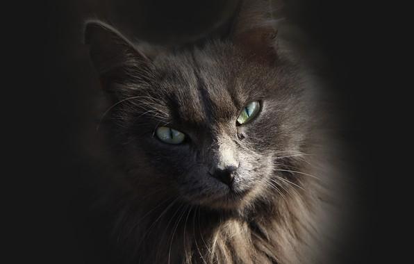 Картинка кошка, взгляд, фон, киса