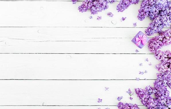 Картинка цветы, фон, весна, flowers, сирень, lilac