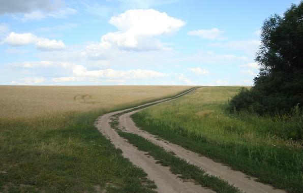 Картинка дорога, пшеница, поле, хлеб, простор