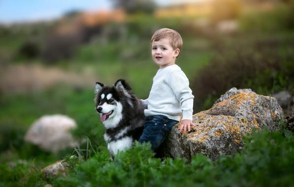 Картинка трава, природа, животное, камень, собака, мальчик, малыш, ребёнок, хаски, пёс
