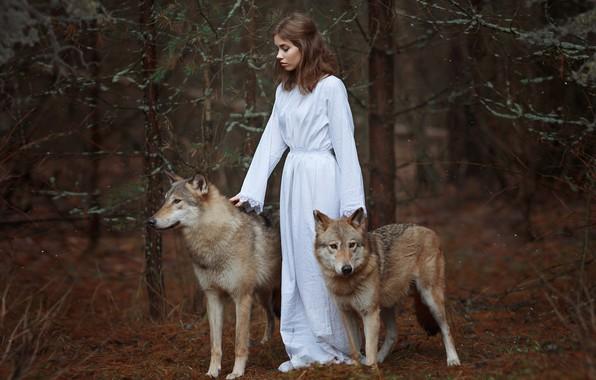 Картинка лес, девушка, волки, Светлана Никотина