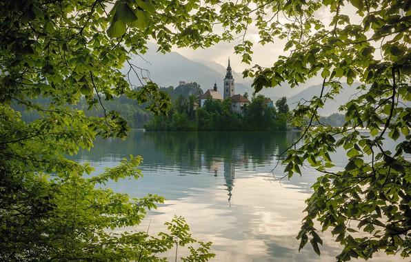 Картинка лето, ветки, озеро, листва, весна, Блед, Бледское озере, Церковь Вознесения Девы Мари