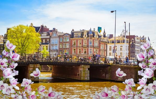 Картинка мост, река, весна, Амстердам, цветение, bridge, blossom, Amsterdam, flowers, old, spring, buildings, Netherlands, canal