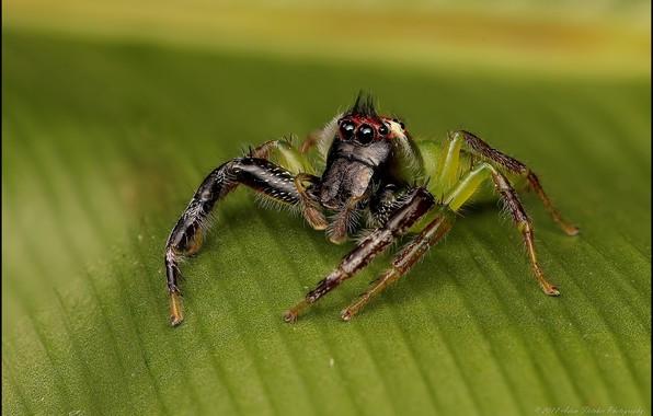 Картинка макро, лист, паук
