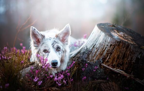 Картинка цветы, пень, собака