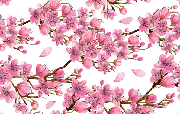 Картинка цветы, ветки, дерево, текстура, белый фон, wood, texture, flowers, white background, twigs