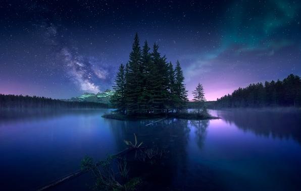 Картинка лес, небо, ночь, северное сияние, Канада