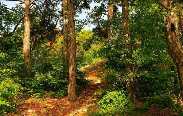 Картинка Природа, Тропинка, Деревья, Лес, Nature, Forest, Trees