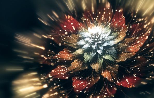 Картинка белый, цветок, капли, линии, полет, красный, блики, фрактал, коричневый, flower, fly, digital art