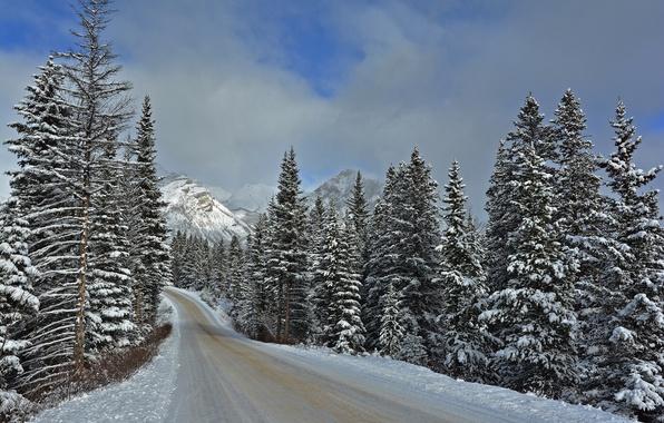 Картинка зима, дорога, лес, снег, природа