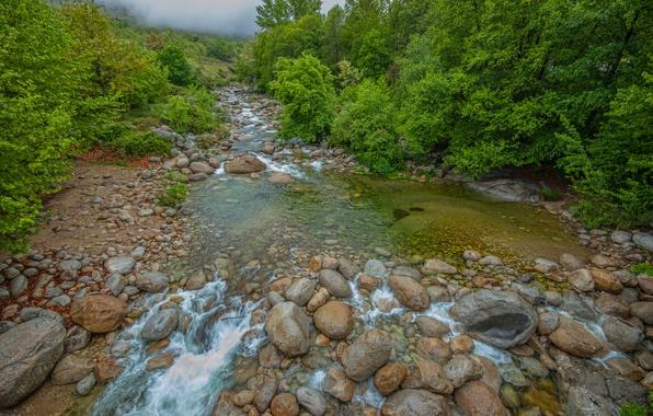 Картинка Поток, Туман, Лес, Камни, Nature, Речка, River, Fog, Forest