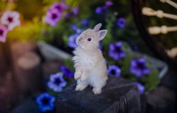 Картинка цветы, маленький, кролик
