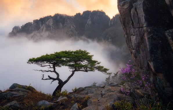 Картинка трава, облака, пейзаж, цветы, горы, туман, скала, дерево, куст, сосна