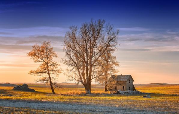 Картинка свет, дом, дерево, утро